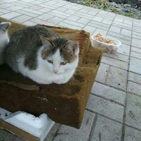 На дачах в Сиротино живут два прекрасных котёнка