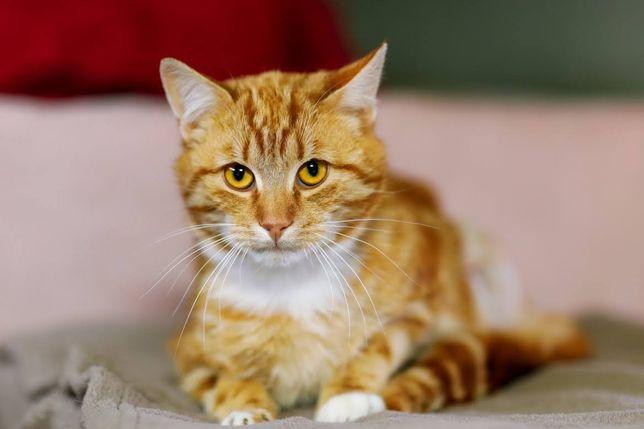 Wyjątkowy kot Radzio