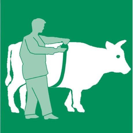 Miara do wyznaczania wagi bydła/trzody.Miara zoometryczna