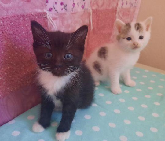 Две кошечки, два месяца, отдадим в добрые руки!