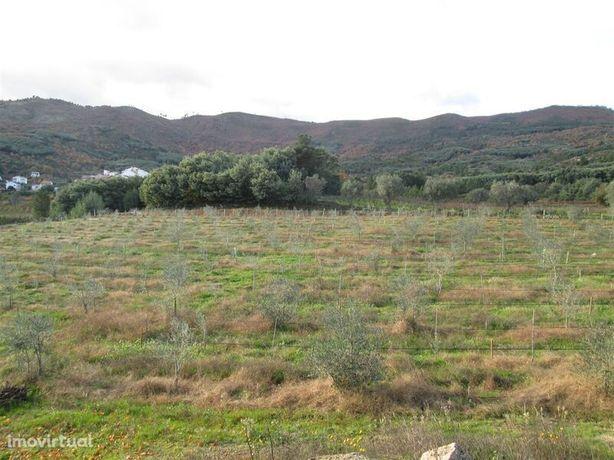 Terreno Agrícola Vale Formoso Covilhã