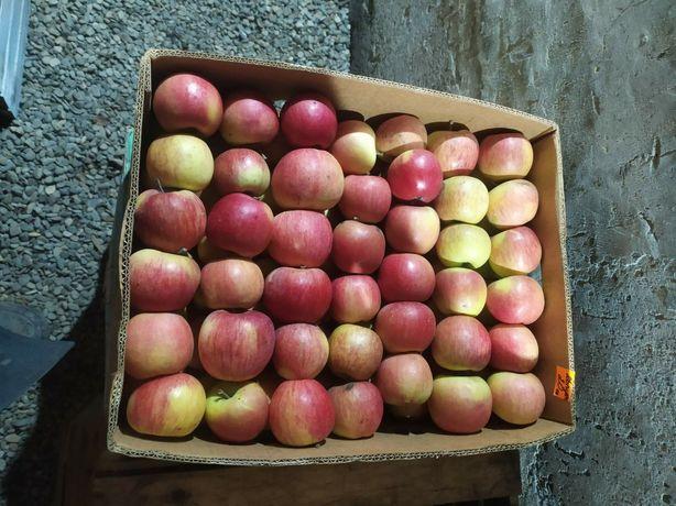 Яблуко яблука фуджі