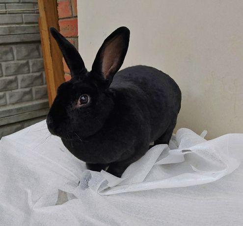 Продам породистых кроликов