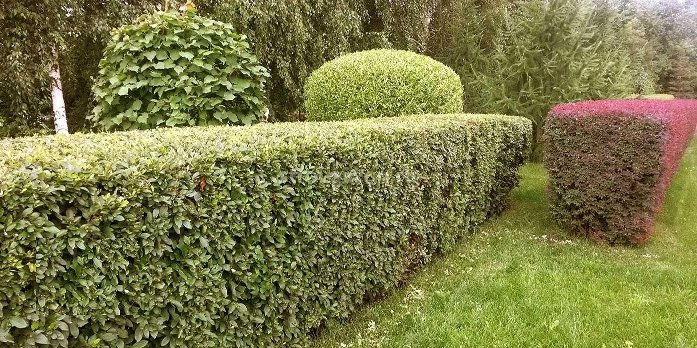 Озеленение, услуги садовника.