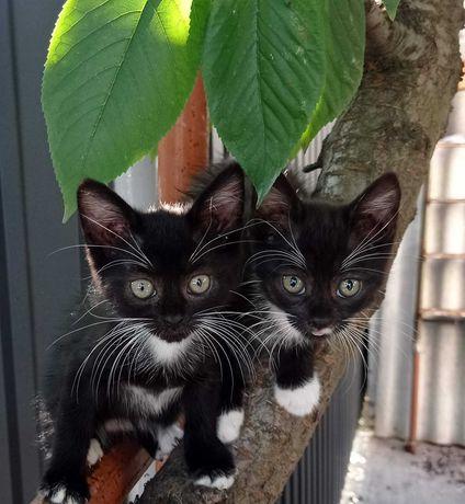 Подарю черненького котенка