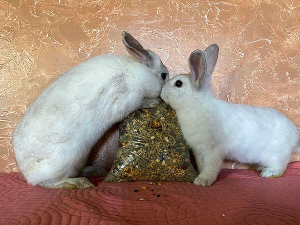 А вы уже купили корм для кролика или морской свинки?)