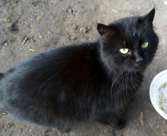 Черная кошечка принесет огромное счастье в дом