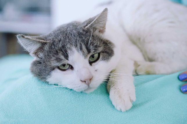 Мару - щекастый котяра в добрые руки