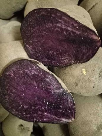 Фиолетовая картошка с фиолетовой мякотью