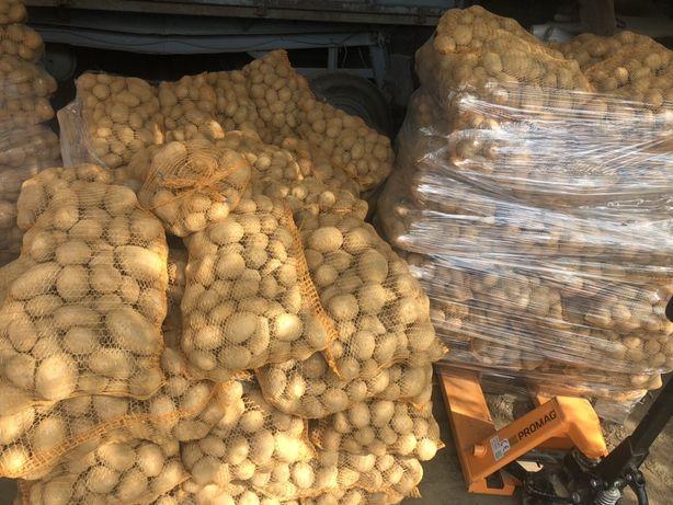 Ziemniaki Vineta i Gala