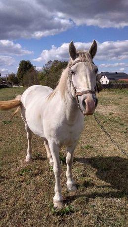 коні. кобила