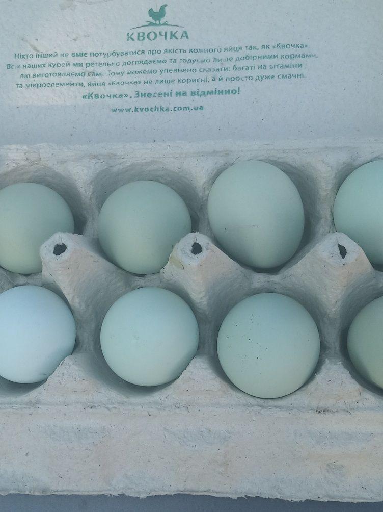 Яйцо инкубационное Амераукана