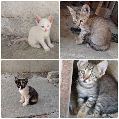 Gatinhos bebés para adoção responsável