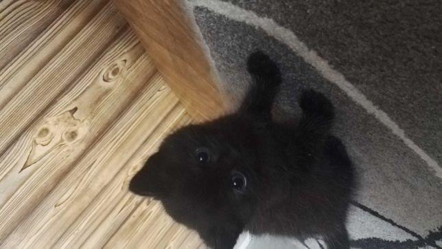 Piękna mała zabawna kotka