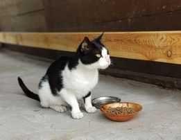 Towarzyski kotek szuka domu