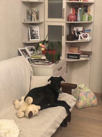 Собачка 10 месяцев ищет дом. Уже стерилизована