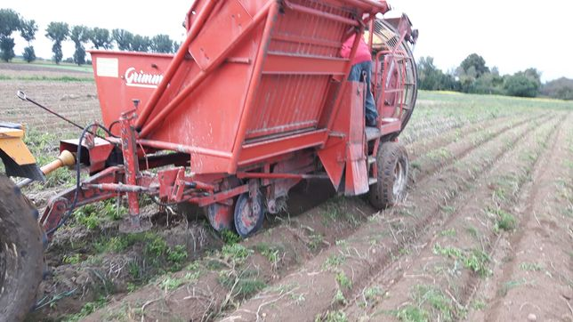 Kombajn do ziemniaków oraz warzyw Grimme Europa Standard