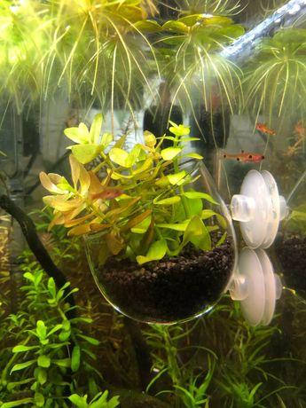 Szklana doniczka do akwarium