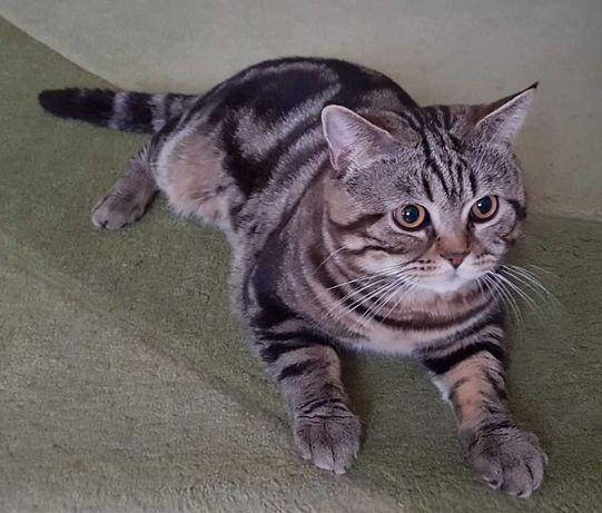 Кот для вязки Херсон