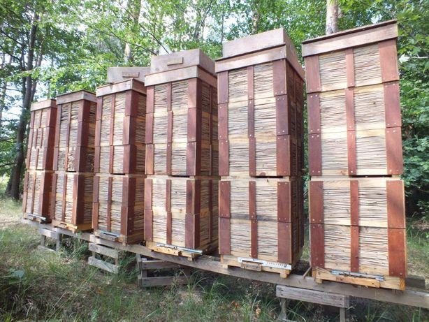 Matki pszczele Włoszki z Alp Unasiennione 2021