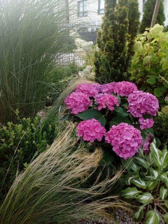 Usługi ogrodnicze, ogród