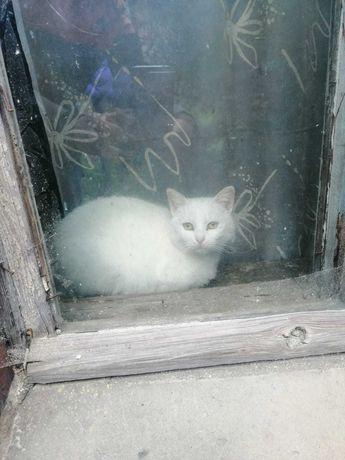 Piękna biała kotka i reszta szukają domu