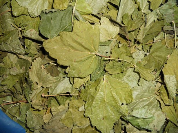 Лист смородины сушеный продам