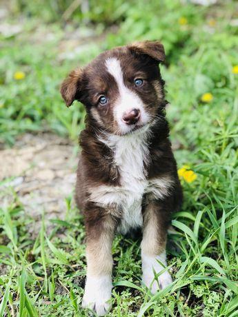Киви девочка ищет дом щенок