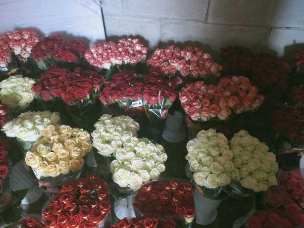 Рози, тюльпани, гвоздика, вазони