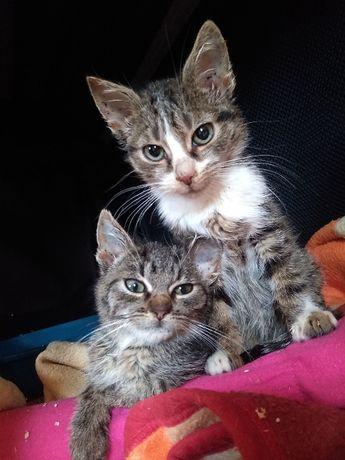 Kocie maluchy szukają domu