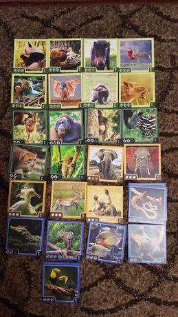 Карты зверокуб ,карточки зверокуб.