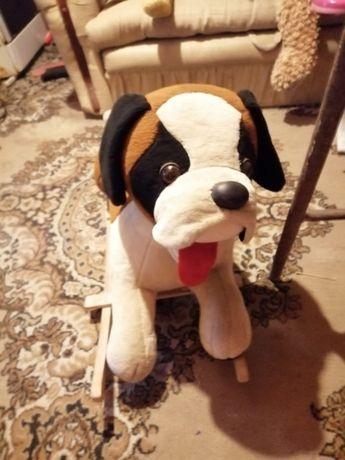 Pies piesek na biegunach