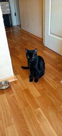 Отдам в хорошие руки кота и кошечку можно по отдельности
