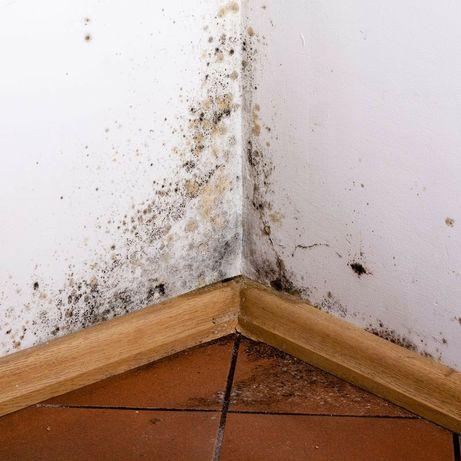 Problem z wilgocią? Pleśń grzyb? Szukamy przyczyn i rozwiązań