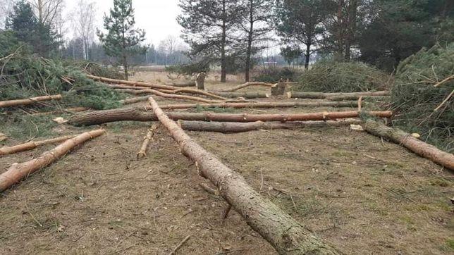 Wycinka lasów i drzew. Koszenie traw i zarośli