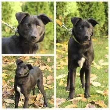 Бонни, черная красавица, щенок, 6 мес
