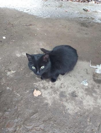 Киця чорна в доьрі руки кошеня