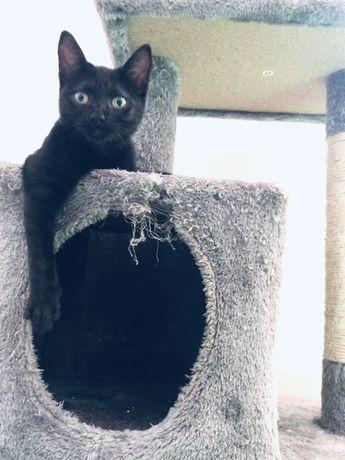 2 gatinhas para adopção