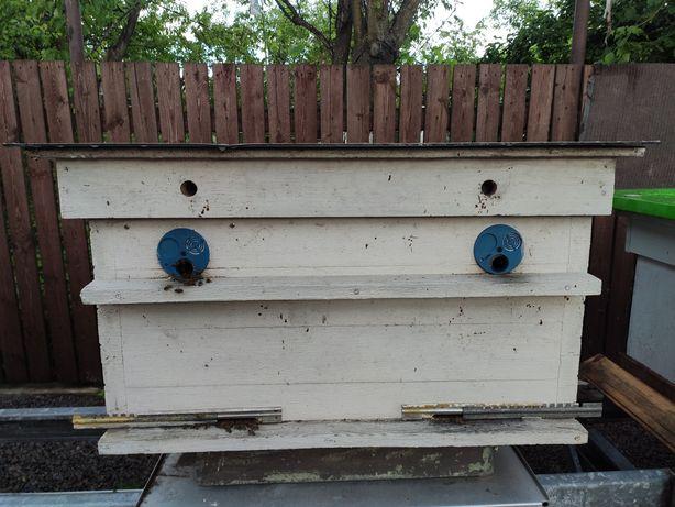 Пчелы ульи продам Баришівка
