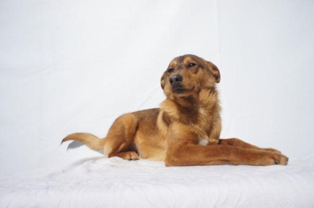 Funny - cão jovem