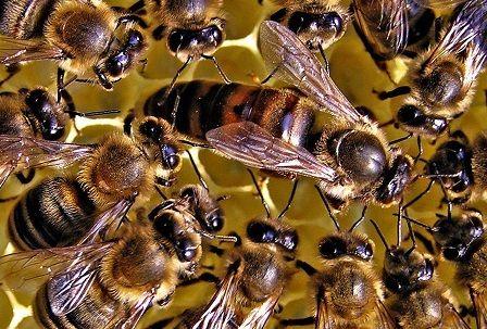 Sprzedam matki unasienione i odkłady pszczele pszczoły ule miód