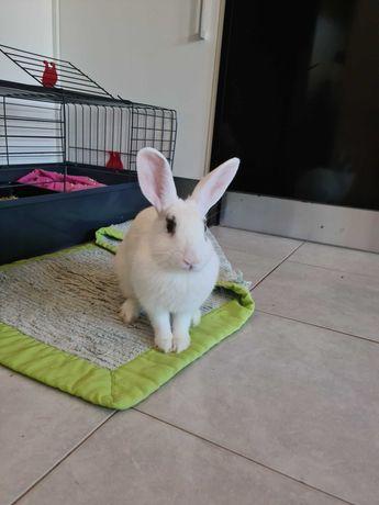 Vendo coelho anão + gaiola