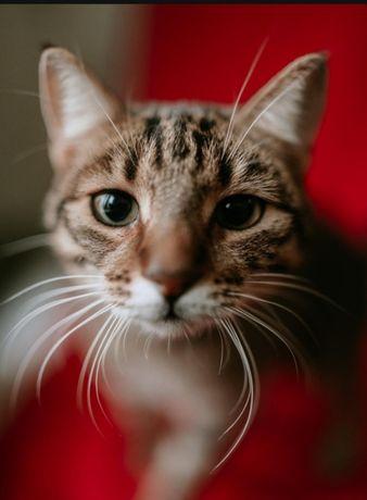 волнуша кошечка 1.5 лет. Котики, котята, кошечка, котенок, кот