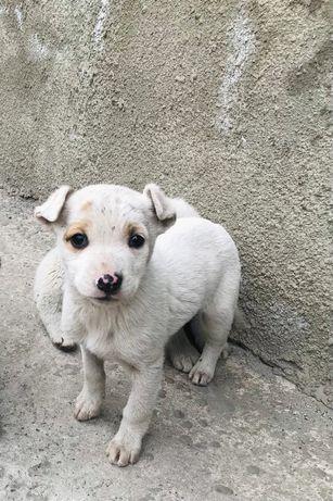 Собака, щенок.