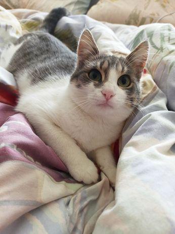 Котокотейшество Саймон ждут своего любящего Человека.