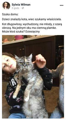 Znaleziono kota/kotkę