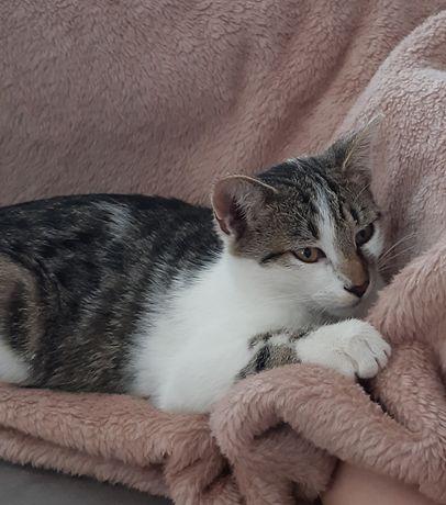Zaginął młody kotek Tofik