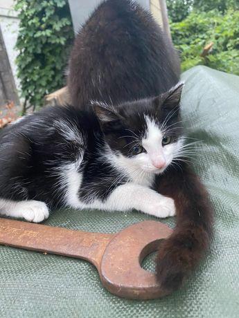 Dwa małe kociaki szukają domu.