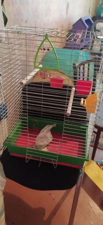 Большая клетка для попугай