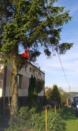 Cięcie przycinanie wycinanie drzew Konstantynów Pabianice Aleksandrów
